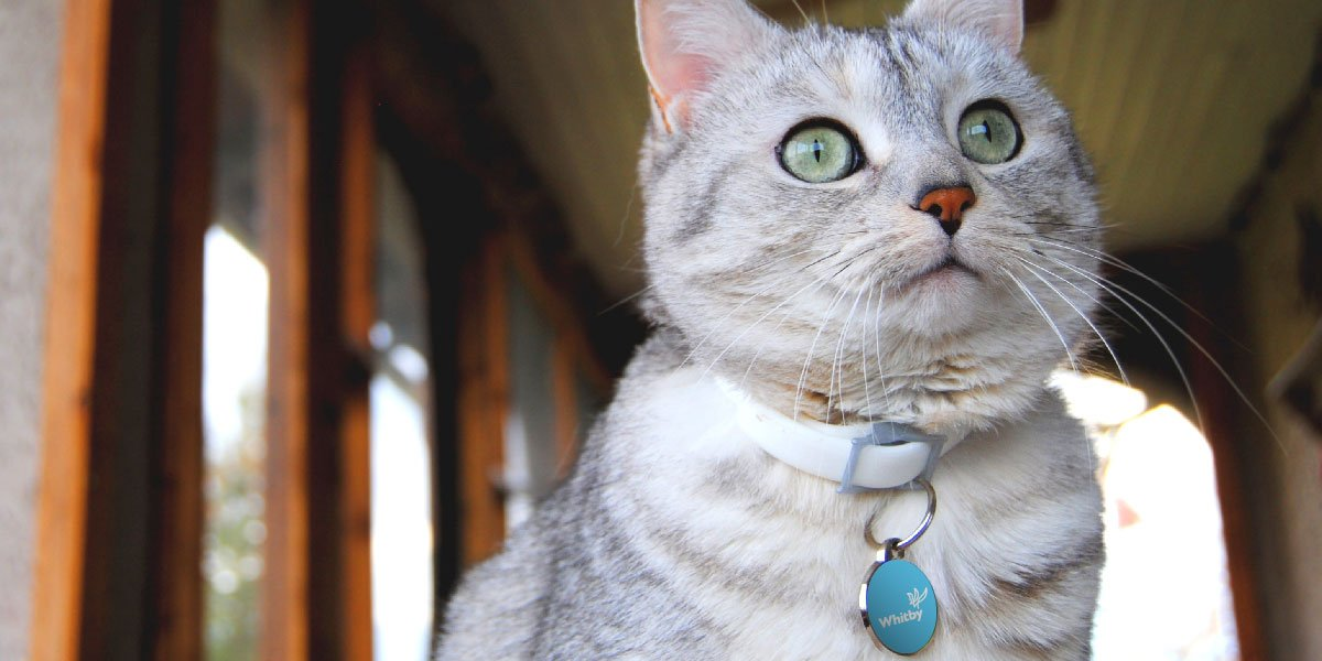 Cat wearing Whitby DocuPet tag